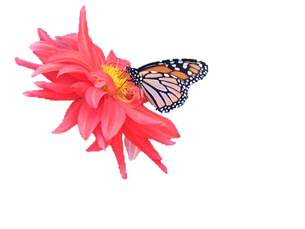 Butterfly on Flower.png