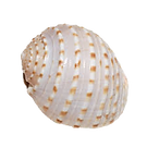 Shell 1.png