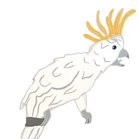 White Cockatoo.png