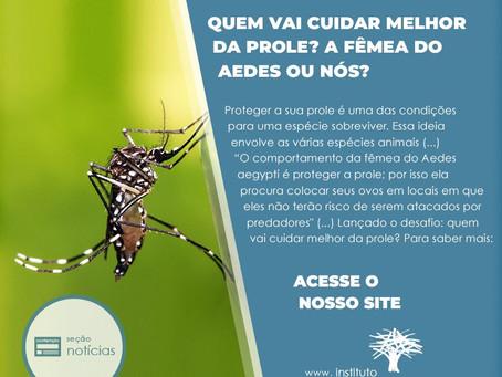 Quem vai cuidar melhor da prole: a fêmea do Aedes aegypti ou nós?