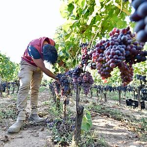 Fuori Mondo Vineyards