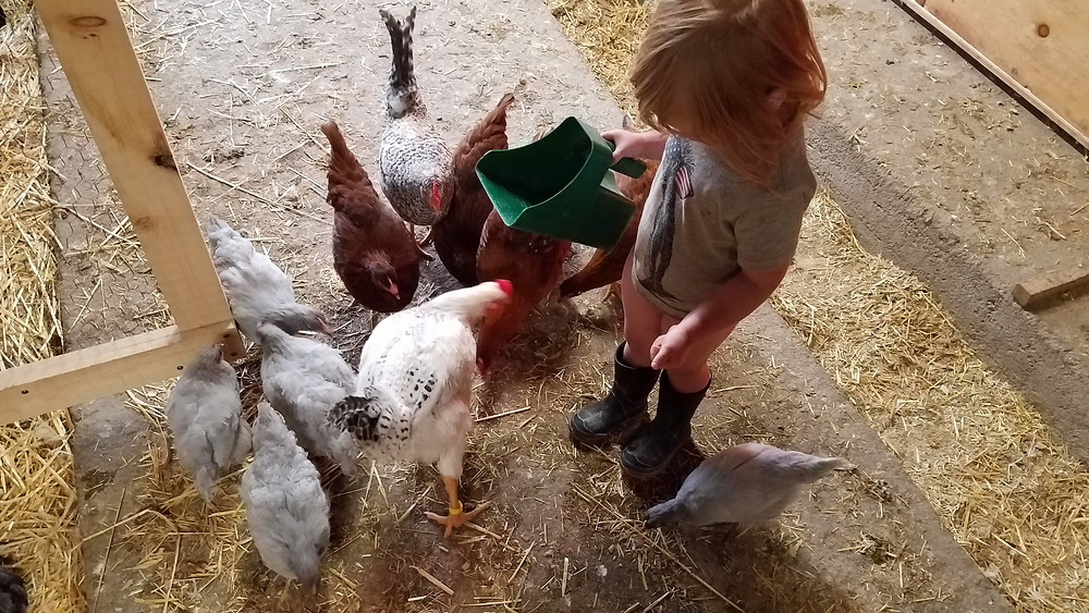 Farm Hand helping with chores