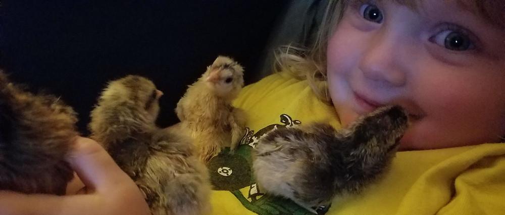 Our Farm Hand cuddling Chicks