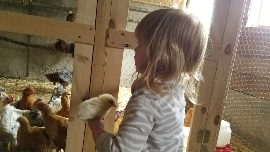 Want happy, empowered kids? Cute chicks are the key!