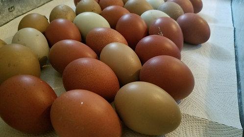 Ayam Marani Hatching Eggs