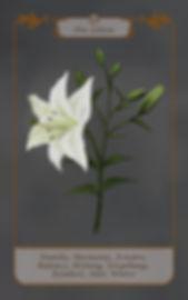 30 Die Lilien LS.jpg