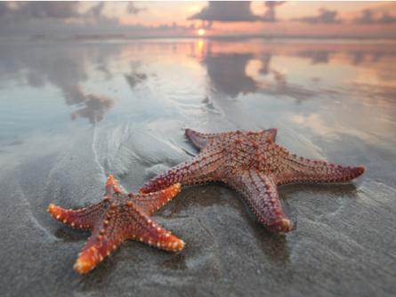 The Starfish