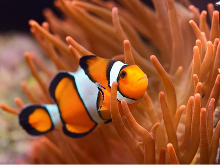 No They Are Not Actual Clowns, They are Fish!