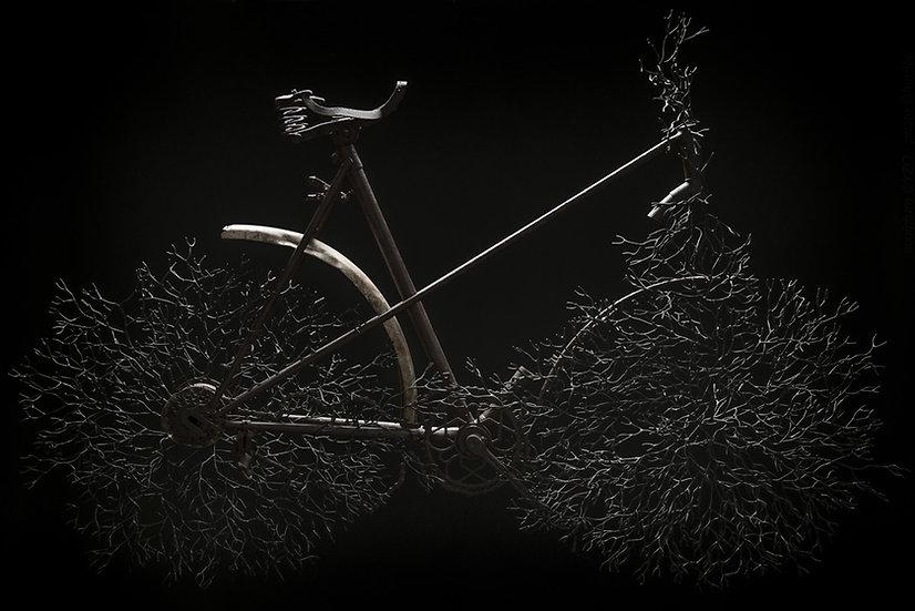 Vélo enchevêtré