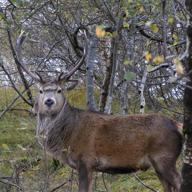 deer2.png