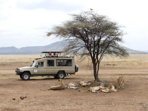 Safari with Lion King Adventures, Tanzania