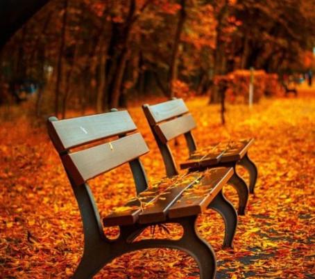 秋の今、やるべき就活