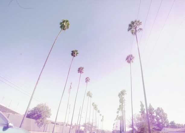 diese scheisse palm trees.png