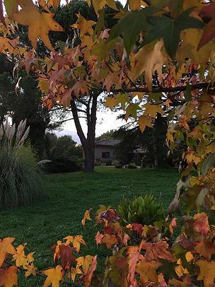 AutumnNepi.jpeg