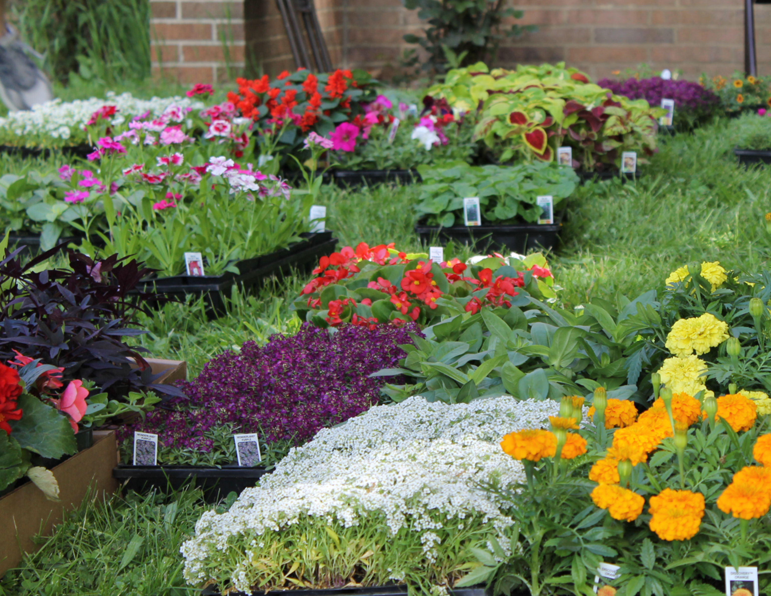 Annual Flower Sale