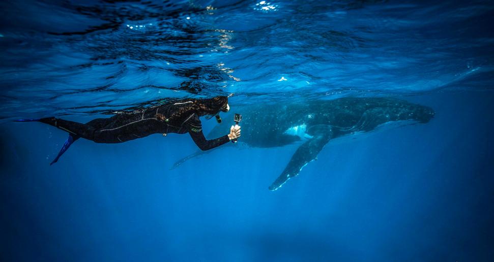 Tonga: Humpback & Lei Lani