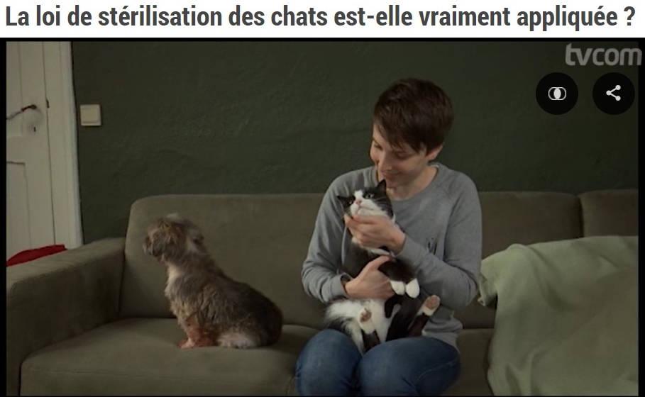 Camille Minne fait une interview sur TVCom pour parler de la loi sur la stérilisation, refuge Belgique, Brabant wallon, SPA, Everyone Matters ASBL