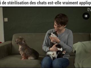 EM dans la presse : La loi de stérilisation des chats est-elle vraiment appliquée ? (TV COM)