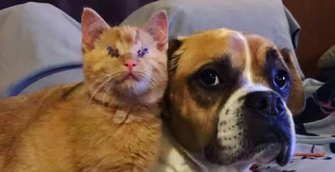 Chaton roux aveugle sauvé par l'association Everyone Matters et adopté avec son ami chien dans le canapé, refuge Belgique, Brabant wallon, SPA