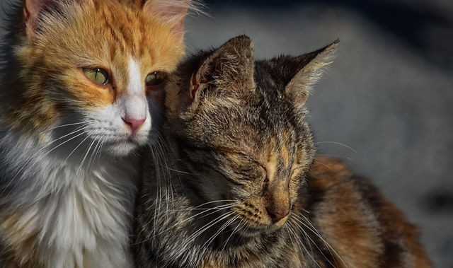 Chat, abandon, refuge chats, adoption chat, adoption chaton, adopter, refuge belgique, association, stérilisation, Brabant wallon