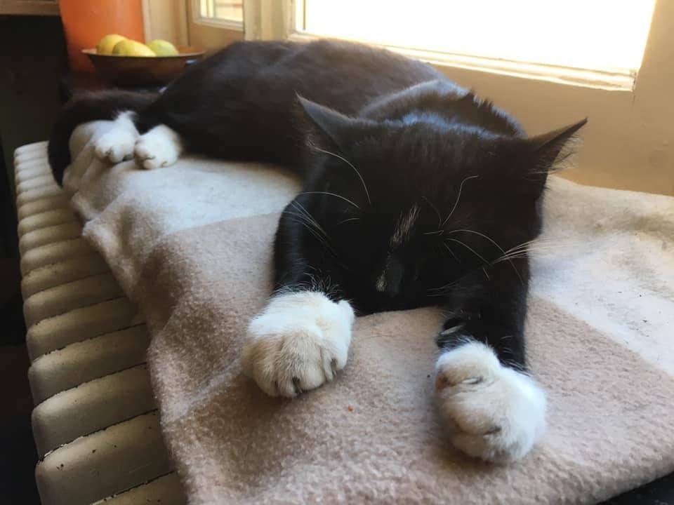 Chat noir aux pattes blanches sur le radiateur, refuge Belgique, Brabant wallon, SPA, Everyone Matters association