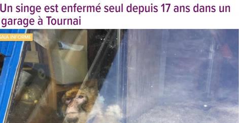 Un singe est enfermé seul depuis 17ans dans un garage à Tournai, sensibilisation, refuge Belgique, protection animale, SPA, Everyone Matters ASBL