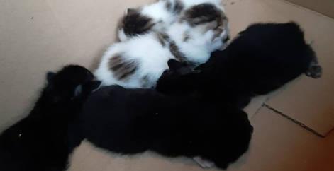 chatons abandonnés dans une boite, refuge chats, adoption chat, adoption chaton, adopter, refuge belgique, association, stérilisation, Brabant wallon