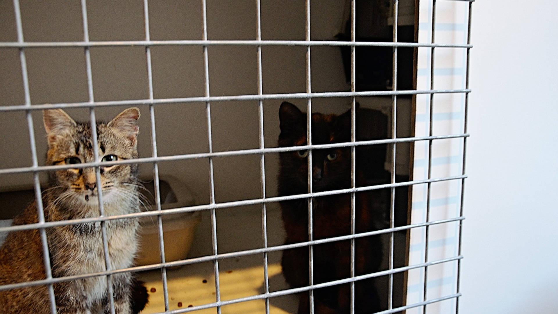 Chat errant capturé dans une cage pour se faire stériliser, Brabant wallon, refuge chat, SPA Belgique