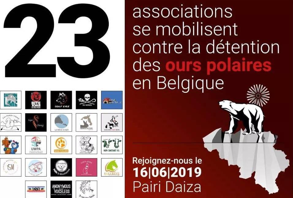 23 association se mobilisent contre la détention des ours polaires, Pairi Daiza, sensibilisation, campagne, refuge Belgique, protection animale, SPA, Everyone Matters ASBL