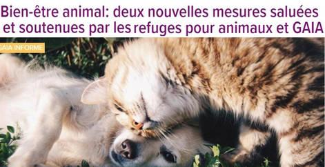 Bien-être animal, Gaïa Belgique, refuge Belgique, protection animale, SPA, Everyone Matters ASBL