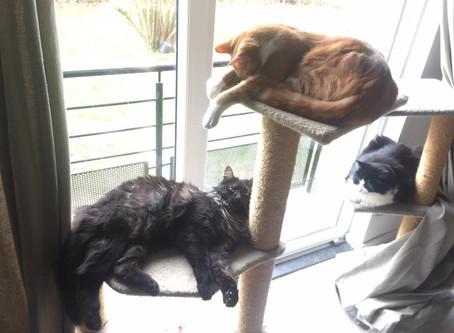 J'ai dix chats… (journées portes ouvertes à la salle de bain)