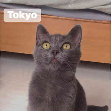 Eleonore / Tokyo