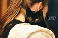 Bénévole dans un refuge en Brabant wallon avec un chat noir