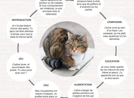 Ce dont votre chat a besoin.