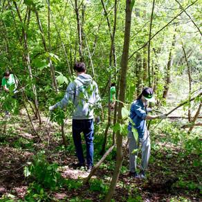 «Новости Губернии» рассказали о проекте «Самарские Лесные Сады»