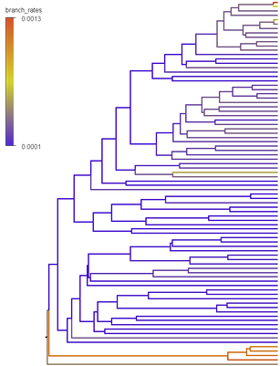 branch_rates_tree_example.png