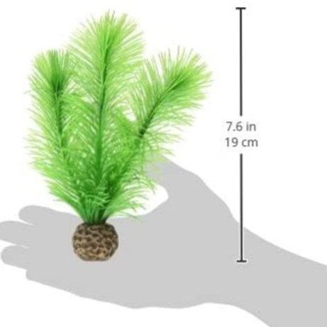 Green Feather Fern