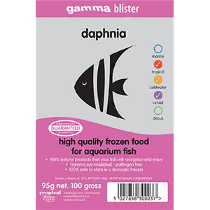 Gamma Daphnia