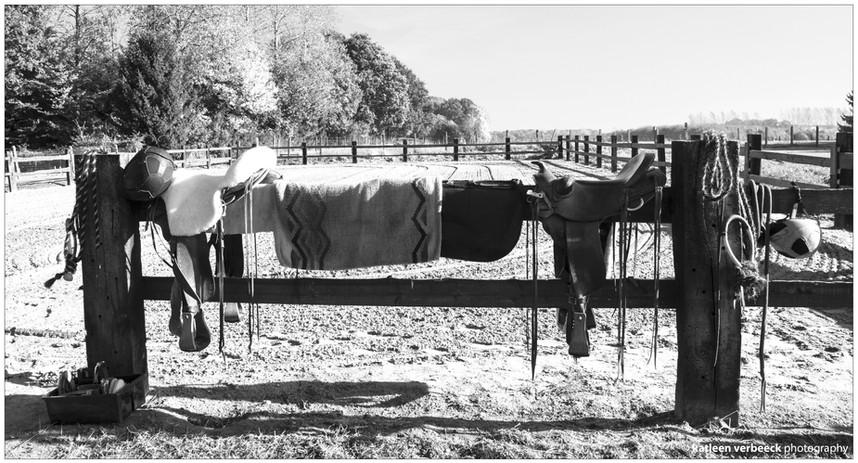 Horsemanshop 1 - 02.jpg