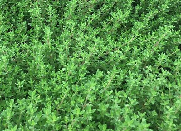 Thyme Common