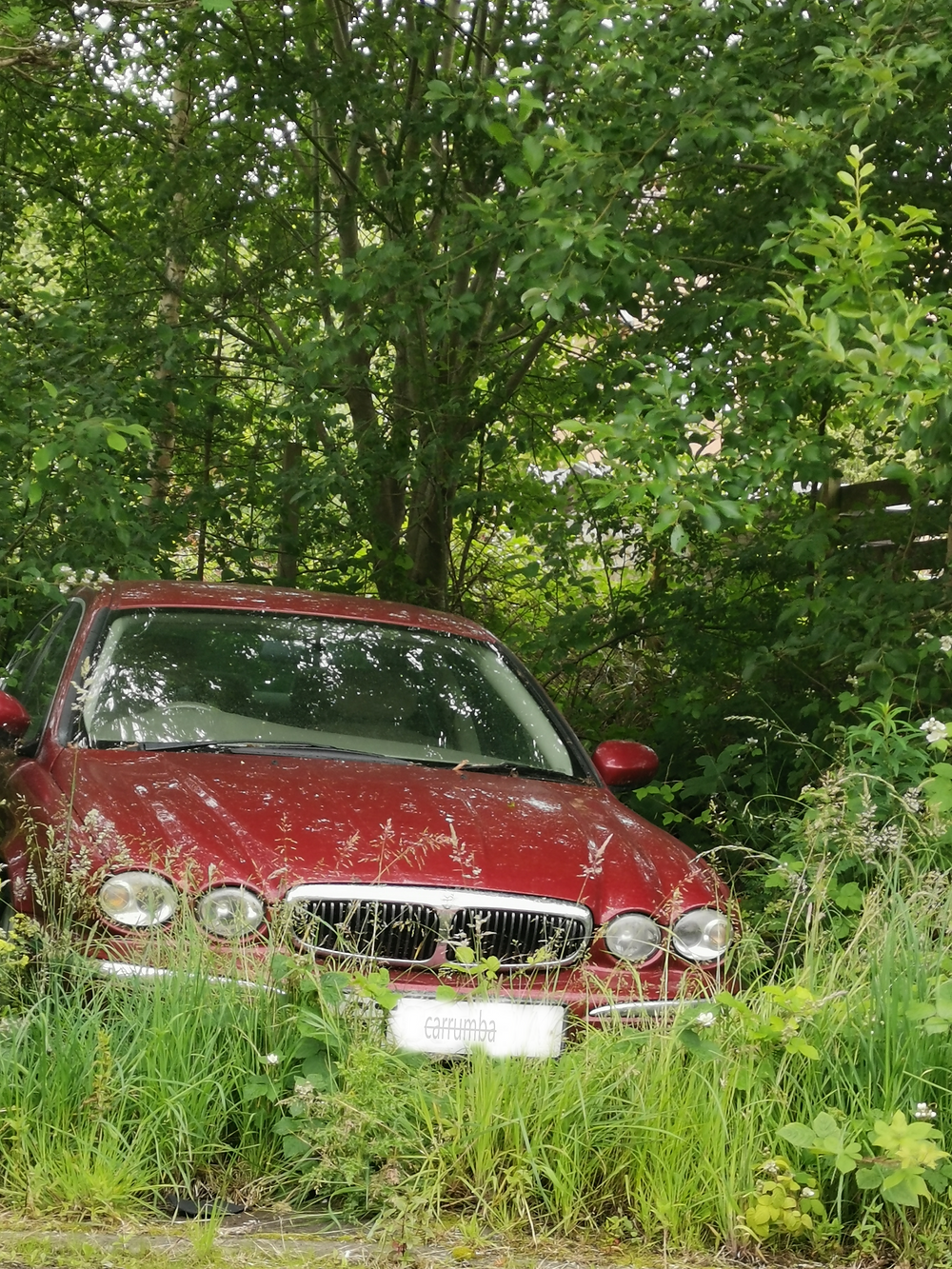 Red Jaguar car under trees and surrounded by bonnet height, overgrown grass