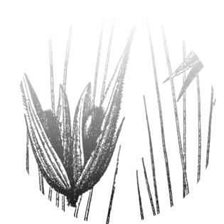 grains2_0001_Слой-6.png