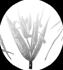 grains2_0002_Слой-4.png