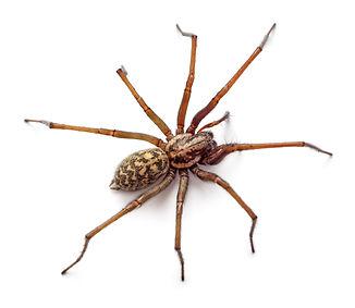 Big spider isolated on white background_edited.jpg