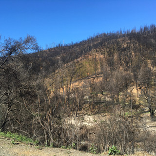Carr Fire Scar with some returning grass