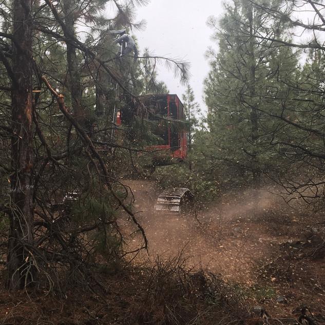 MIchigan California Timber Company