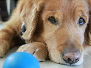 How Fido Can Boost Your Mood