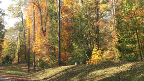 Celebrate Fall Color!