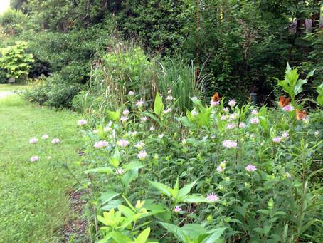 Confessions of a Native Plant Addict