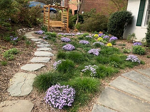 Carex rosea and Phlox subulata lawn subs